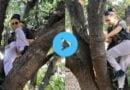 अचानक से फोन लेकर पेड़ पर चढ़ गईं Sunny Leone, फैन्स बोले- नीचे नेटवर्क नहीं आ रहे क्या? देखें